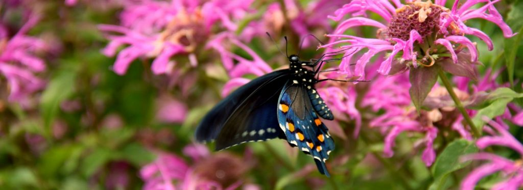 The Native Texas Butterfly House U0026 Garden Is Included In General Admission  And Free For Heard Museum Members.